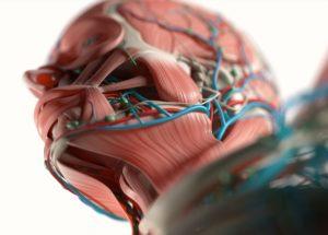 Cranial Nerve Surgery for Facial Paralysis and Sleep Apnea   Dr. Jose Barrera, MD